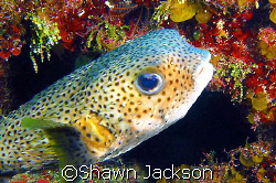 Fish Den dive site. by Shawn Jackson 